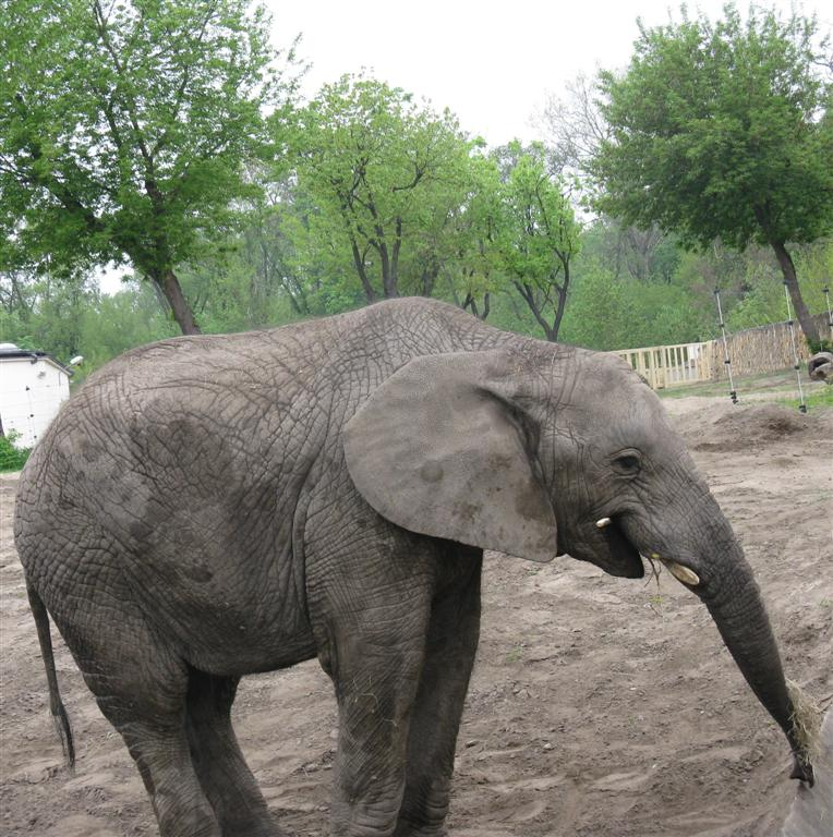 Bieg dookola zoo 2010_gizynski-slon