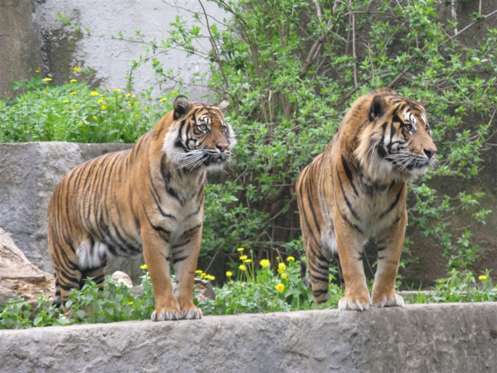 Bieg dookola zoo 2010_gizynski-tygryski
