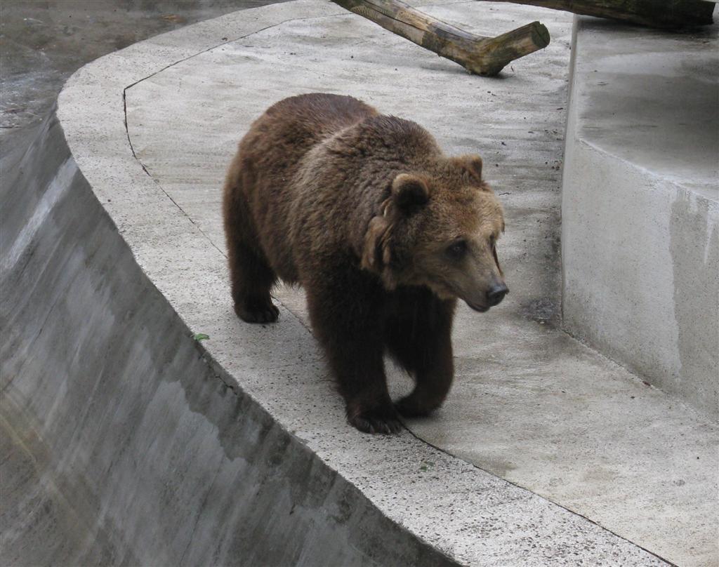 Bieg dookola zoo 2010_gizynski_niedzwiadek