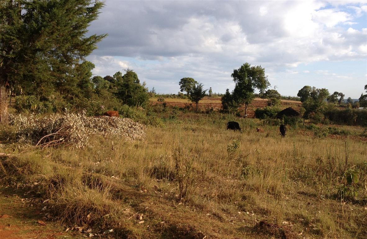kenia_2014-9