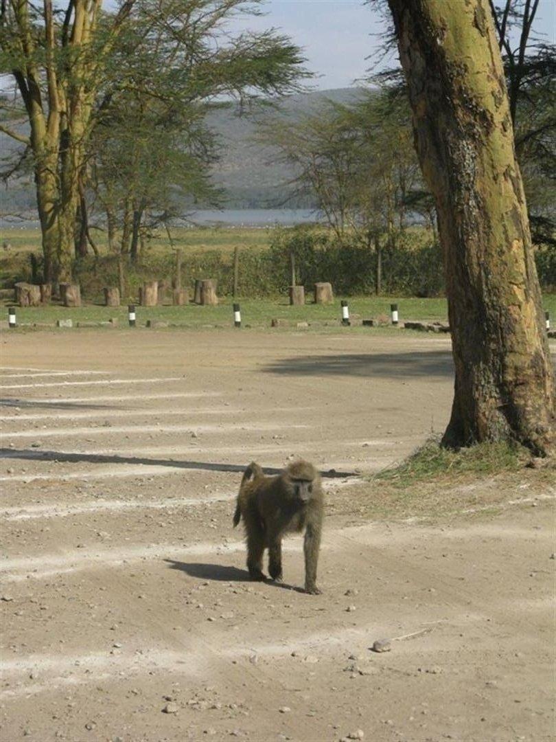 Kenia_2011_Nakuru_Gizynski (1)