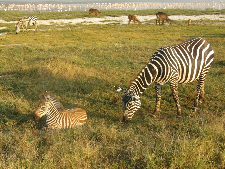 Kenia_2011_Nakuru_Gizynski (3)