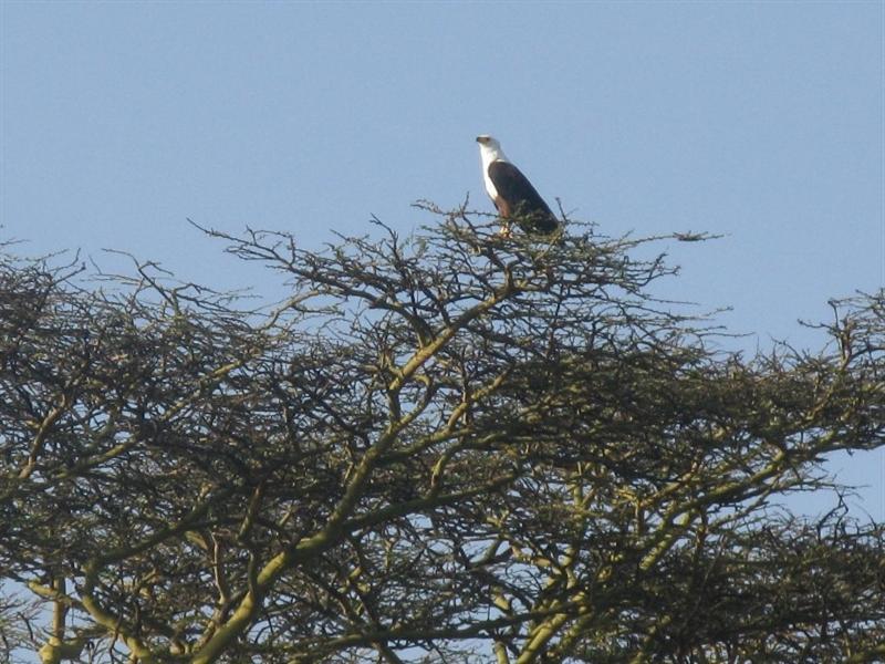 Naiwasha-Kenia-2011-Gizynski (1)