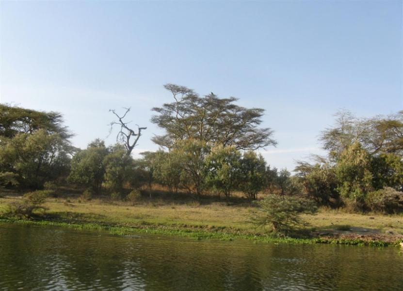 Naiwasha-Kenia-2011-Gizynski (2)