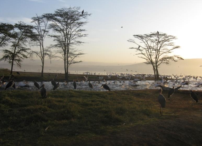 Nakuru-2 (2)