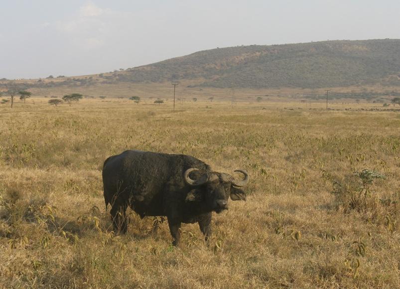 Nakuru-2 (3)