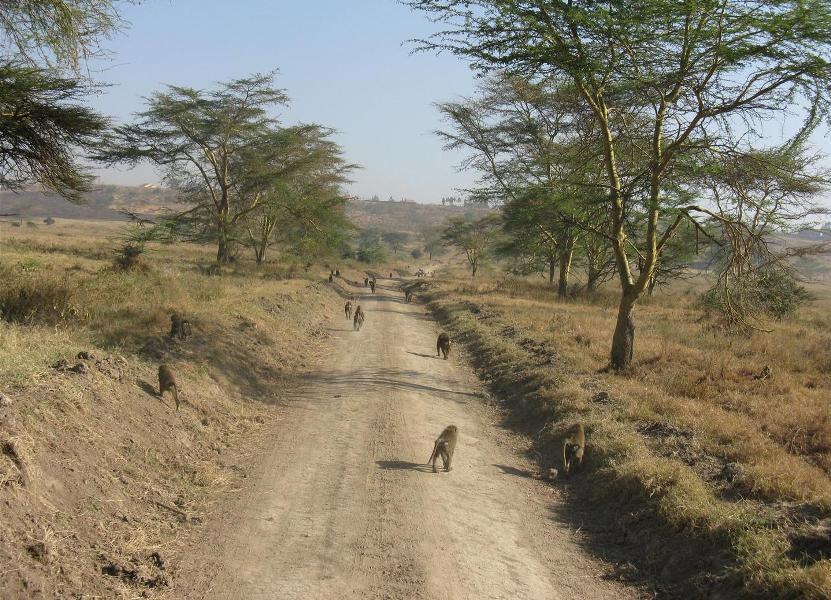 nakuru_kenia-2011-Gizynski (13)