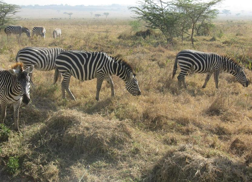 nakuru_kenia-2011-Gizynski (7)